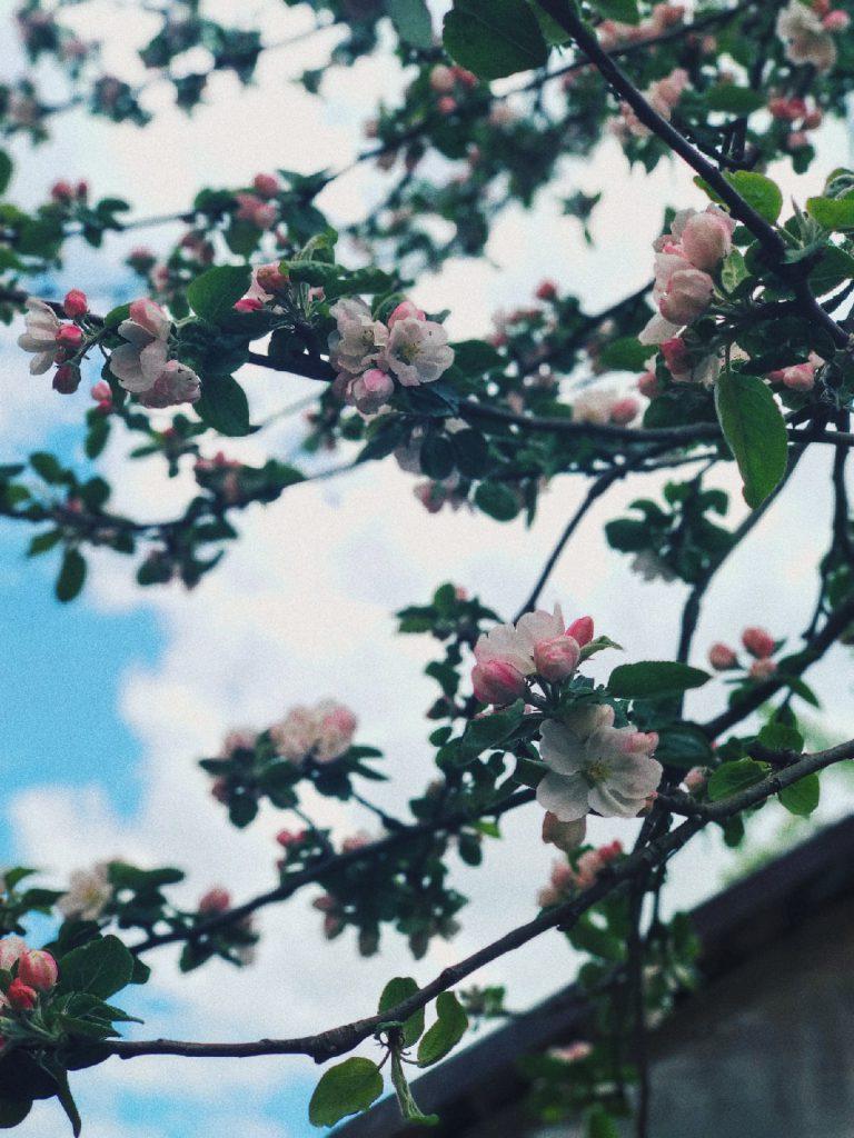 С первым днем весны!